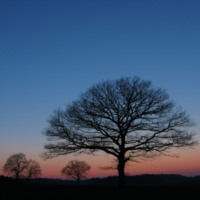 The Lone Tree at Sunset