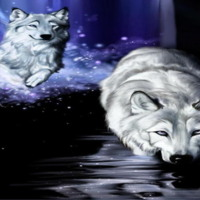 White Wolves Swimming