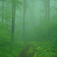 Green Misty Forest