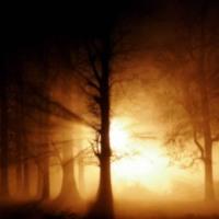 Light Through Trees in Sepia