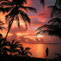 Palm Tree Beach Sunset