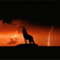 Wolf & Lightning