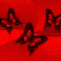 Red & Black Butterflies