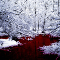 Snowy Trees & Blood River