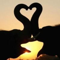Elephanty Love