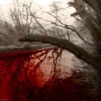 Blood Water Tree