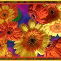 Orange & Yellow Gerber Daisies