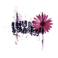 Numbers & Gerber Daisy