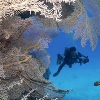 Under the Sea Coral
