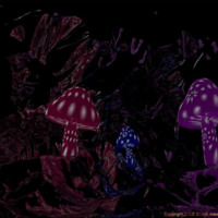 Night  Mushrooms