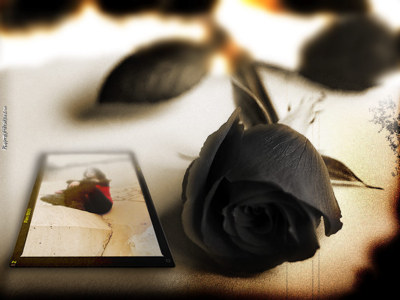 Black Roses Tumblr Photography